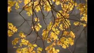Steven Wilson - Mariusz Duda (The Old Peace - Alec Wildey Tribute)