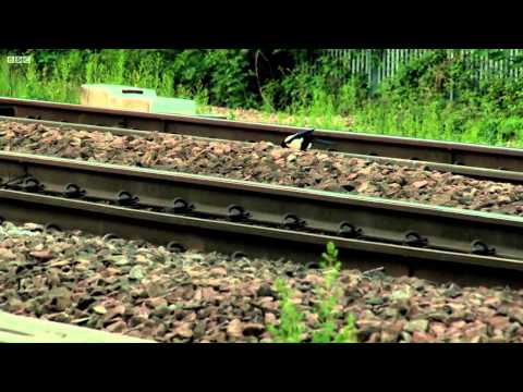 The Railway: Keeping Britain on Track Episode 2:Summer Madness