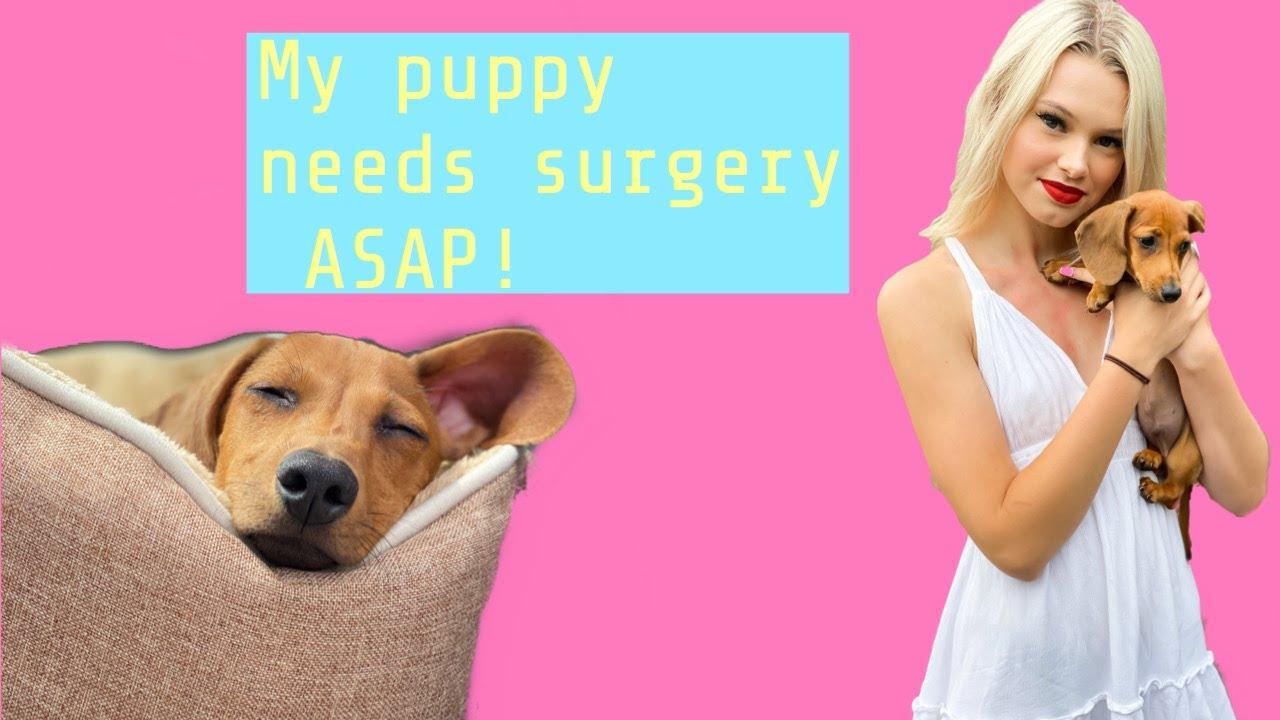 my puppy needed surgery ASAP!!!