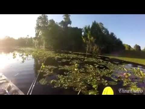 Bass fishing the hillsborough river youtube for Hillsborough river fishing
