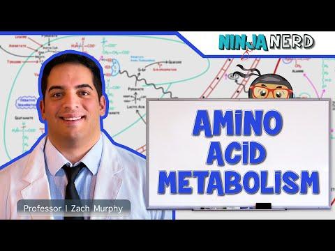 Metabolism | Amino Acid Metabolism
