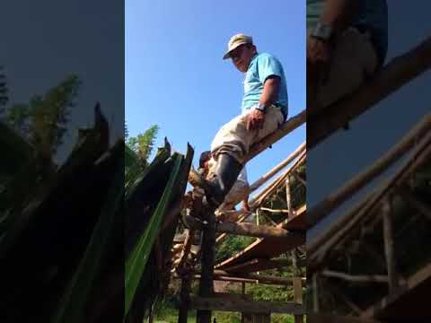 Roof thatching in Belize