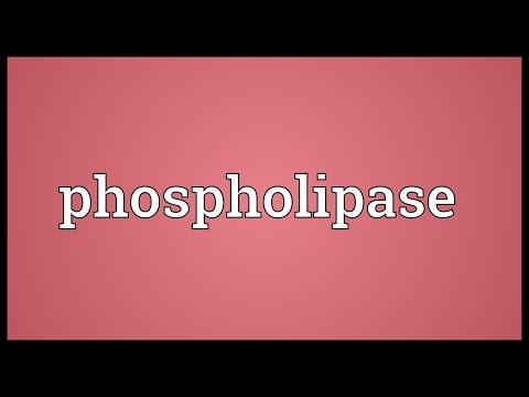Phospholipase Meaning