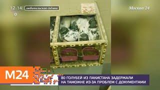 80 голубей из Пакистана задержали на таможне из-за проблем с документами - Москва 24