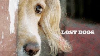 Lost Dogs Indiegogo Promo