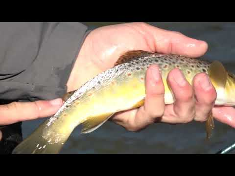 River Fishing In Cadillac - Season 5