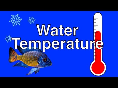 How Temperature Affects Fish Behavior