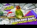 Mengerikan Volume Dan Durasi Amunisi Baru Indra Andong Pesut Sf Samarinda  Mp3 - Mp4 Download