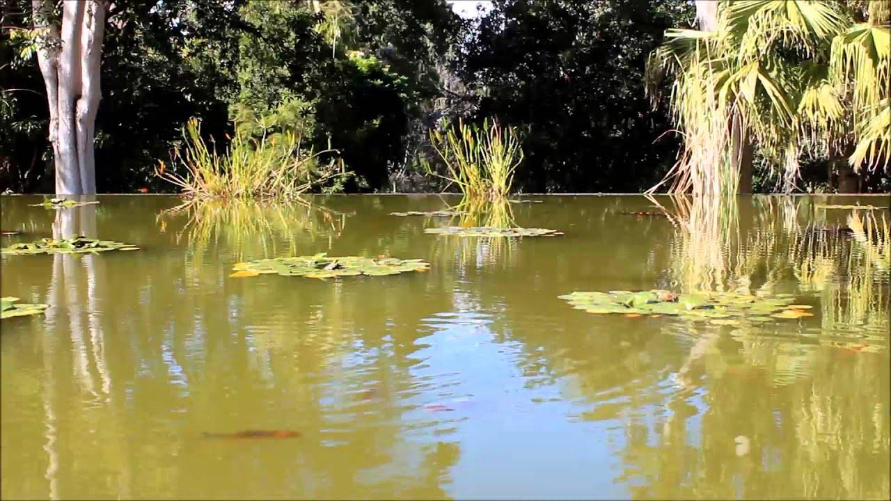 Bird race water boat man jardin botanico puerto de la for Jardin botanico u de talca