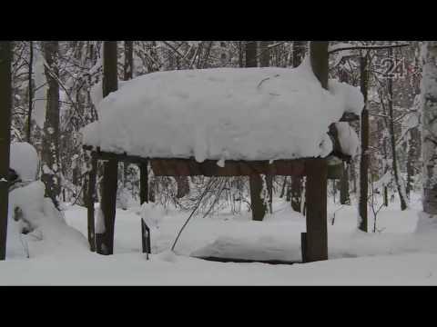 В Татарстане продолжается зимний маршрутный учет охотничьих животных