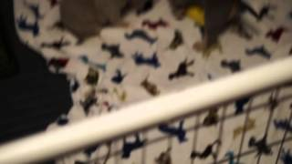 4 WEEKS OLD PUPPIES PLAYING AND POTTY TRAINING