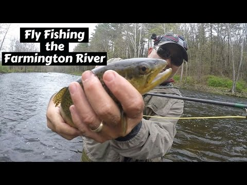 Fly Fishing The Farmington River ~ Catching Natives And Brute Brown Trout!