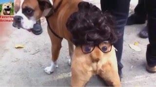 Подборка собак в костюмах! Видео очень уматовое! Смешные животные! Вам понравится!