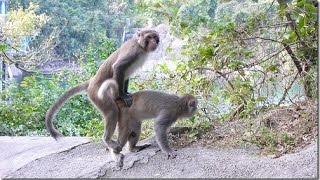 NEW FUNNY MONKEYS IN SINGAPORE ZOO 2017 - Great natural Entertainment !!