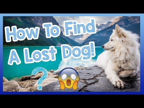 How To Find A Lost Dog! What To Do If Your Dog Goes Missing - Tips And Advice!