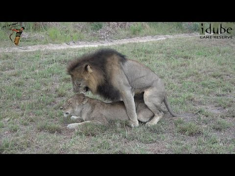 Hounddog - legendado from YouTube · Duration:  1 hour 38 minutes 30 seconds