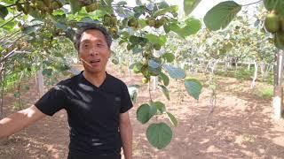 Vicio : kivo-produktanto en Ĉinolando