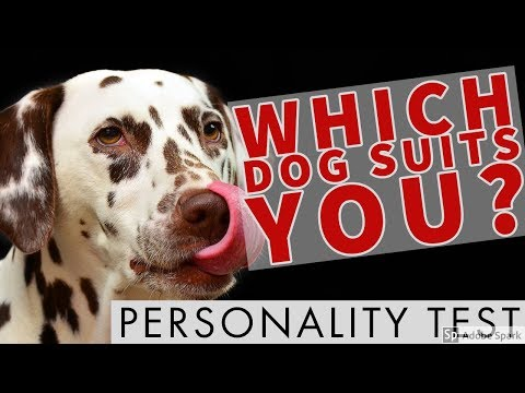 🙊 Which Dog Suits YOU? Personality Test! 🙊