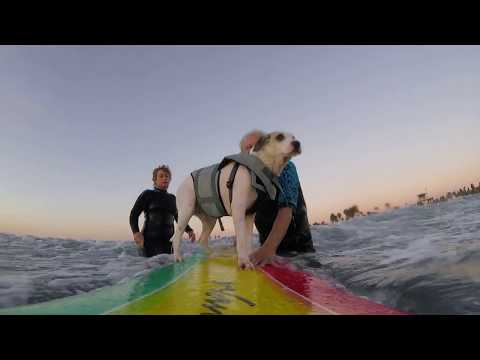 Cooper Surfing At Dog Beach in Ocean Beach California