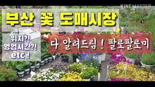 """[부산 꽃시장] """"다 ~ 알려드려요♡""""…"""