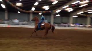 Prairie and Daytona reining State fair 2016