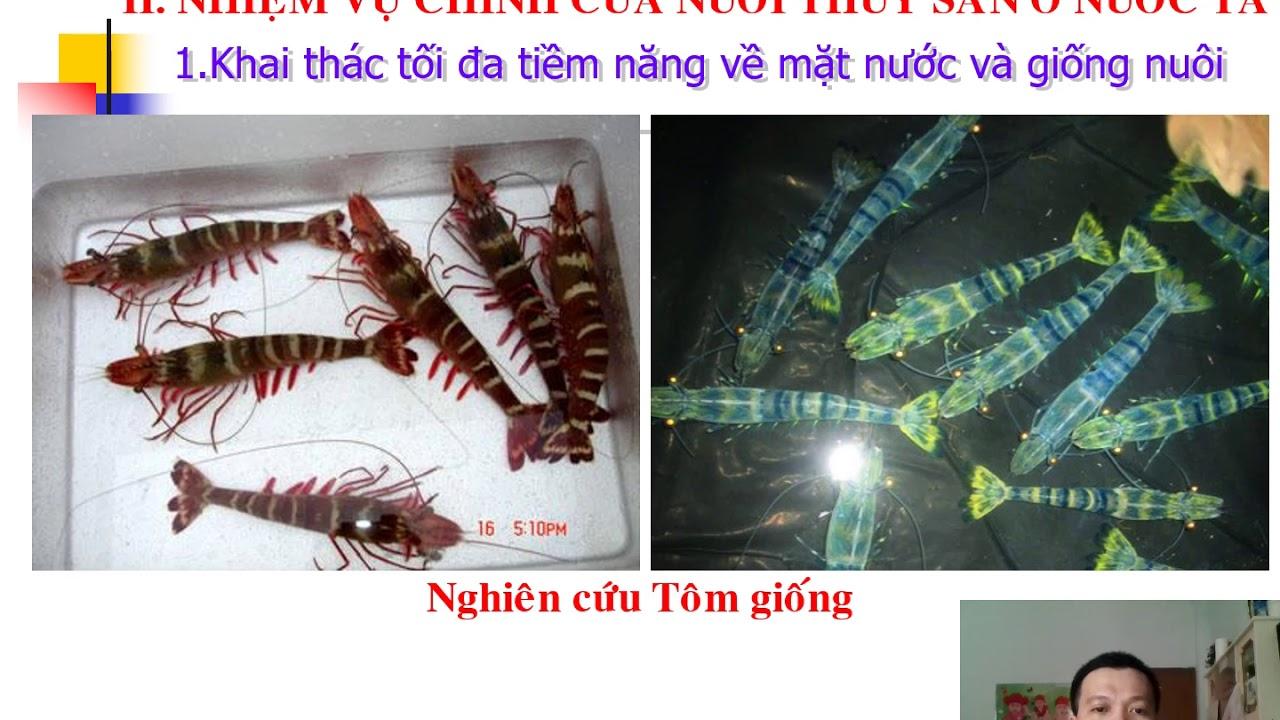 NGT Công nghệ 7 Chủ đề: Vai trò, nhiệm vụ nuôi thủy sản (bài 49)