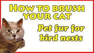 How to brush your cat: Pet fur for bird nests