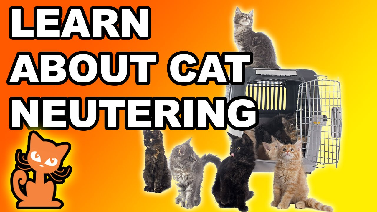 Neutering a cat should i fix my cat info on making the decision neutering a cat should i fix my cat info on making the decision to sterilize your cat sciox Image collections