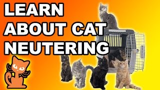 Video Neutering a Cat: Should I fix my cat? Info on making the decision to sterilize your cat download MP3, 3GP, MP4, WEBM, AVI, FLV September 2018
