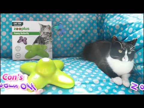 Funny Butterfly Cat Toy ♥ Cat Product Review