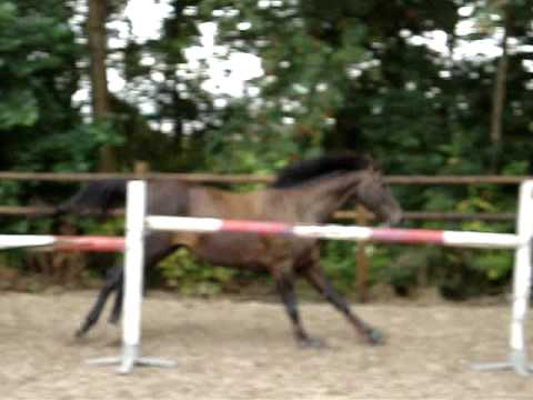 Horse free jumping big obstacles with ease!