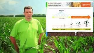 Аденго - инновационный гербицид