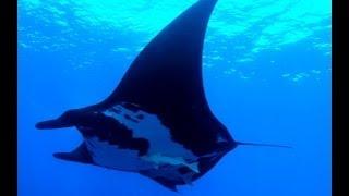 Socorro Island Underwater Video