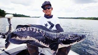 ทริปล่าชะโด ไดโนเสาร์ เขื่อนลำปลายมาส งานนี้สุดจริงๆ by fishingEZ