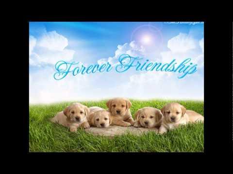 Friendship Day 2014,Friendship Day 2014 SMS,Friendship Day Hindi SMS-friendship Day Special
