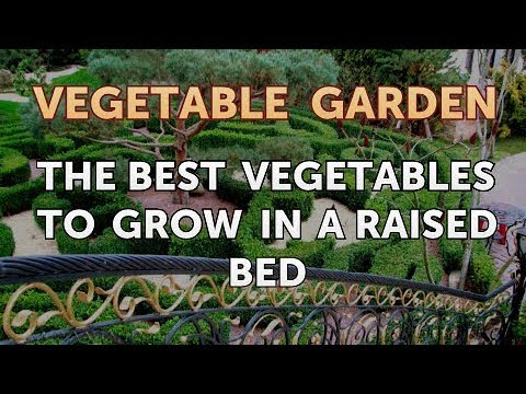The Best Vegetables to Grow in a Raised Bed