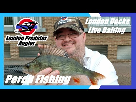 Perch Fishing - Live Bait Session - London Docks
