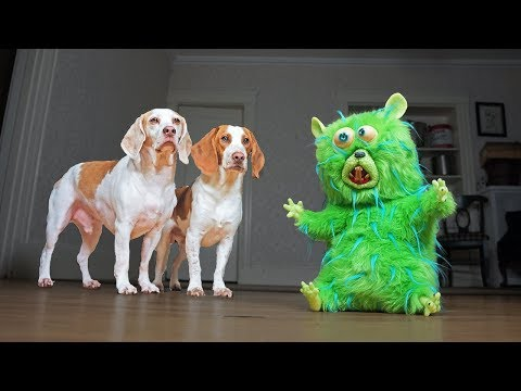 Dogs vs Annoying Hamster: Funny Dogs Maymo & Potpie