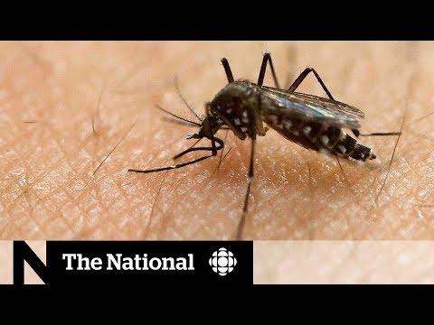 Zika virus still a threat in many of the most popular vacation spots