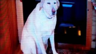 Denver on Animal Planet Bad Dog TV Show