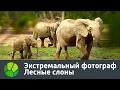 Экстремальный фотограф. Лесные слоны | Живая Планета