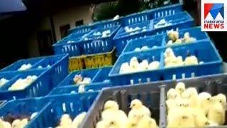 Palakad chicken | Manorama News