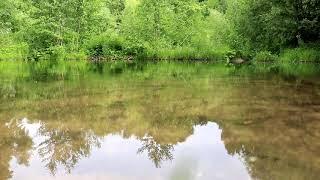№1 Релакс видео, звуки природы, музыка природа