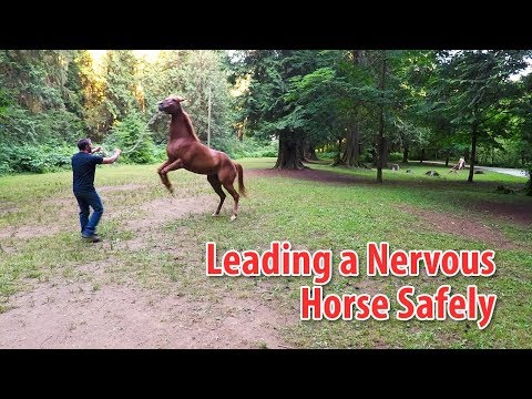 Going For A Walk With A Nervous Or Distracted Horse