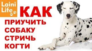 Как приучить собаку стричь когти и не бояться