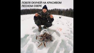 Ловля окуней на лесном озере Рыбалка 27 02 2021