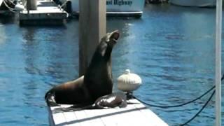Sea Lion Rescue