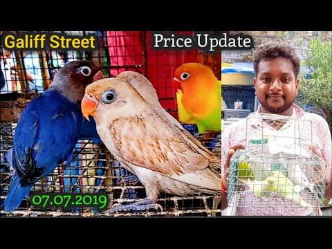 Galiff Street Bird Market In Kolkata Visit & Price Update 7th July 2019   The Largest Bird Market