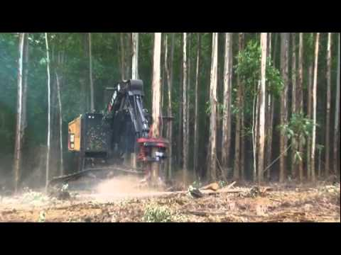 Sappi Forestry In South Africa