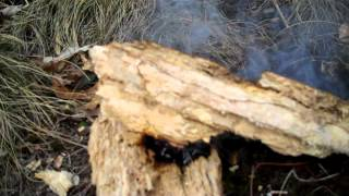 Why I like to use punk wood as a tinder bundle